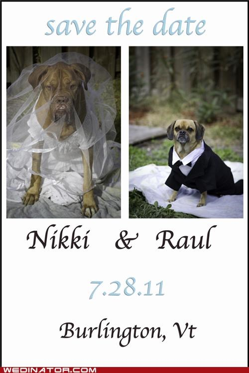 dog wedding,dogs,funny wedding photos,save the date