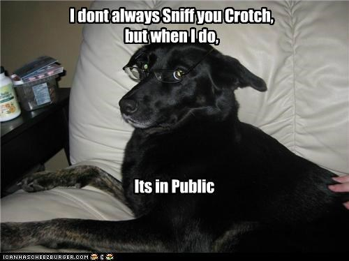 condition,conditional,crotch,labrador,meme,memedogs,public,sniff,the most interesting man in the world