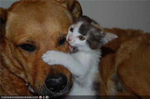 annoying bite biting cataracts dogs eyes goggies goggies r owr friends Interspecies Love patient - 4818778880