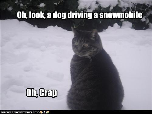 afraid,caption,captioned,cat,do not want,dogs,driving,look,realization,snow,snowmobile