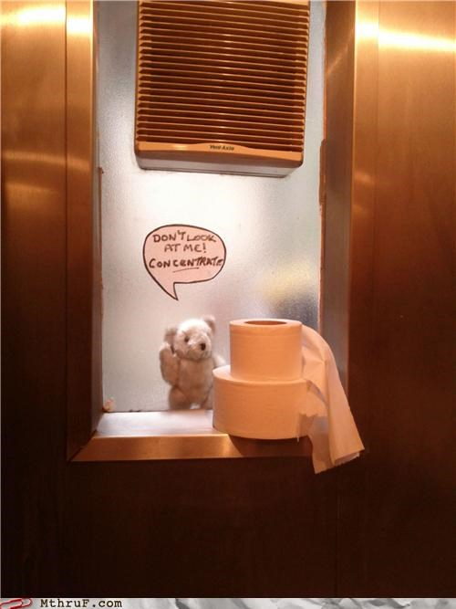 bathroom bear concentration pooping - 4818918656