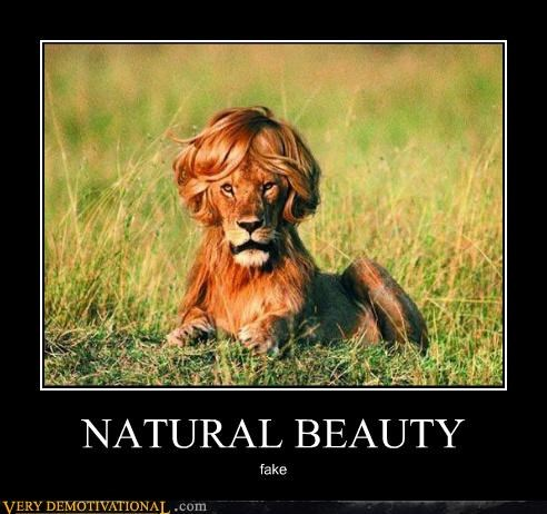 beauty hilarious lion mane photoshopped