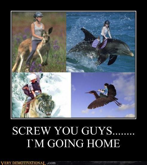 bird dolphin going home hilarious kangaroo tiger - 4819247616
