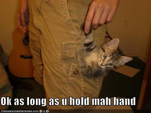 afraid hands holding kitten lolcats lolkittehs pockets scared - 481936128