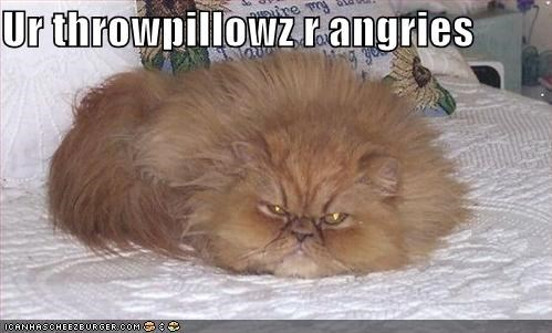 angry,bed,lolcats,orange,pillows