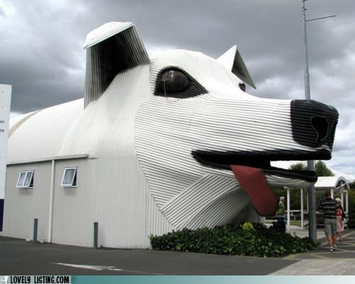 building dogs face house tongue