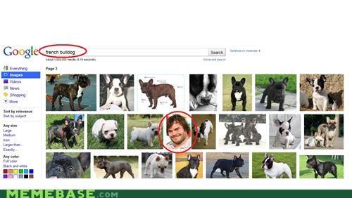 bulldog FAIL google jack black - 4819827456