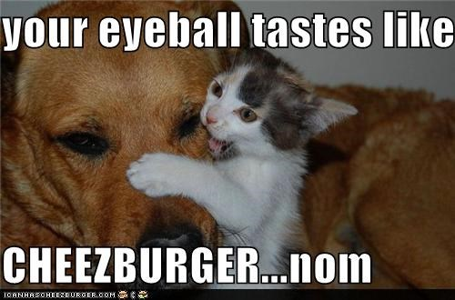 Cheezburger Image 4819855616