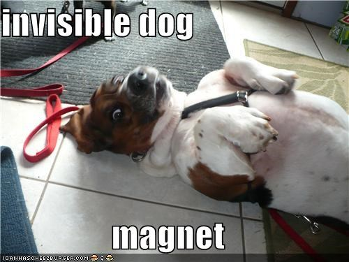 basset hound,dogs,invisible,magnet