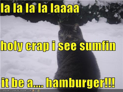 Cheezburger Image 4819953408