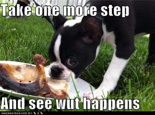 boston terrier,mine,more,noms,one,protecting,step,take,threat,warning