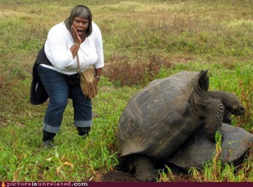 animals humping turtles wtf - 4820105216