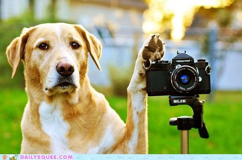 acting like animals camera confused dogs f-stop photograph photographing photography question