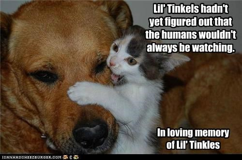 Lil' Tinkels hadn't yet figured out that the humans wouldn't always be watching. In loving memory of Lil' Tinkles