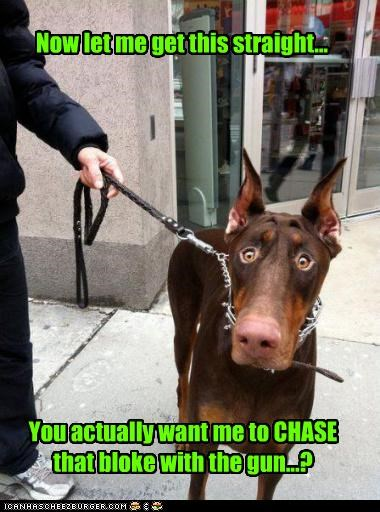 best of the week,chase,confirming,do not want,doberman pinscher,gun,Hall of Fame,man,police dog,question