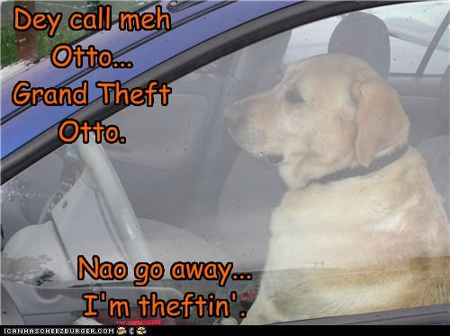 best of the week,car,go away,Grand Theft Auto,Hall of Fame,labrador,name,Otto,pun,stealing