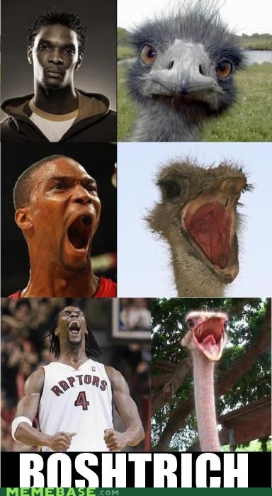 basketball,bosh,boshtrich,Memes,ostrich,raptors,sports,what is this