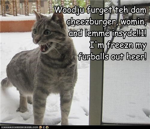Woodju furget teh dam cheezburger, womin, and lemme insyde!!1! I'm freezn my furballs out heer!