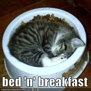 bowl food kitten lolcats lolkittehs sleeping - 482204928