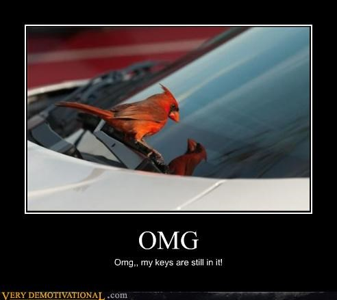 bird,car,hilarious,keys,omg