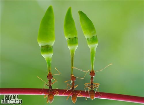 animals,ants,mother nature ftw,nature,neat,photography