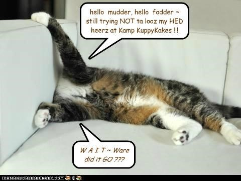 hello  mudder, hello  fodder ~ still trying NOT ta looz my HED heerz at Kamp KuppyKakes !!!