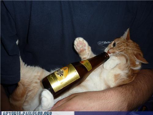 beer cat leffe - 4822449920