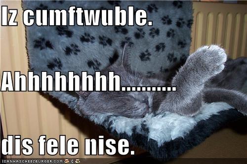 Iz cumftwuble. Ahhhhhhhh........... dis fele nise.