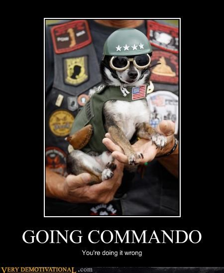 commando dogs doing it wrong hilarious soldier - 4823127808