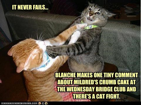 bridge,caption,captioned,cat,cat fight,Cats,club,comment,crumb cake,FAILS,fight,fighting,never,pun