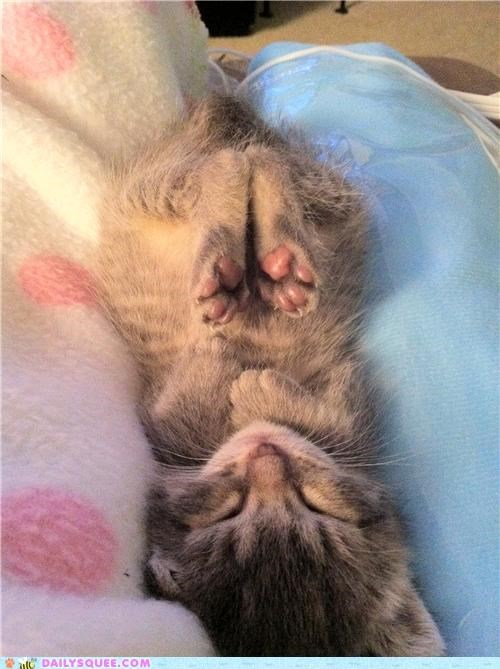 baby Bunday cat cute interruption kitten reader squees sleeping unbearably cute - 4823267584