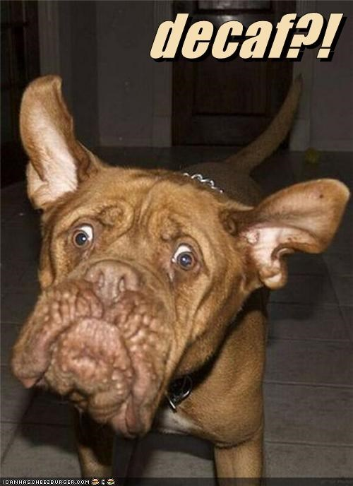 best of the week boxer coffee derpface do not want Hall of Fame mixed breed shocked surprised - 4823498240