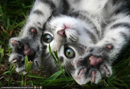 cyoot kitteh of teh day,grass,outside,paws,sun,upside down,waving