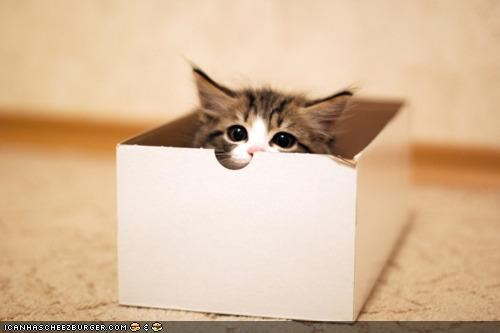 boxes cardboard box cyoot kitteh of teh day hide n seek hiding peeking