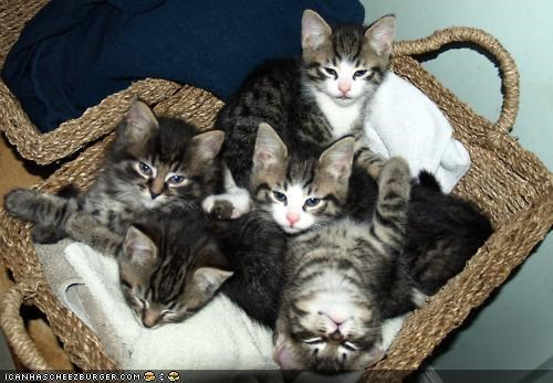 basket,cyoot kitteh of teh day,friends,lots of cats,sleeping,tired