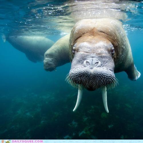 acting like animals kids old upset walrus warning - 4824039936