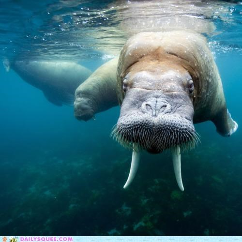 acting like animals colloquial colloquialisms elder kids old old fashioned upset walrus warning - 4824039936