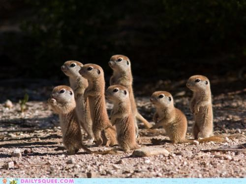 curious,fascinated,ground squirrel,ground squirrels,intrigued,looking