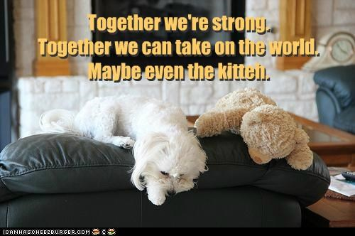 Together we're strong. Together we can take on the world. Maybe even the kitteh. Together we're strong. Together we can take on the world. Maybe even the kitteh.