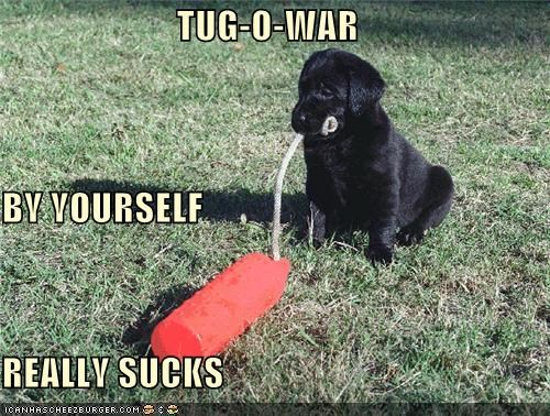 by yourself,do not want,labrador,not fun,puppy,solo,tug o war