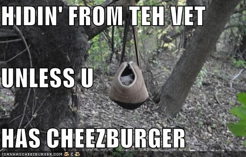 Cheezburger Image 4825075968