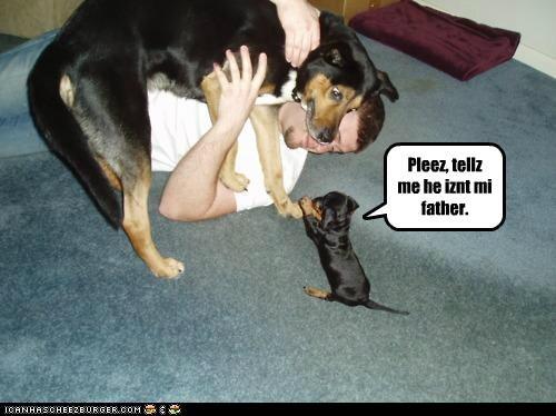 Cheezburger Image 4825412096