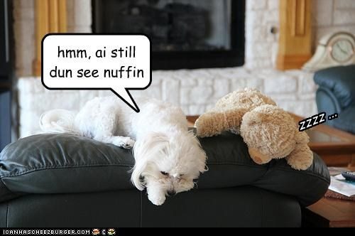 anything,asleep,confused,couch,dont,looking,maltese,see,Staring,still,teddy bear