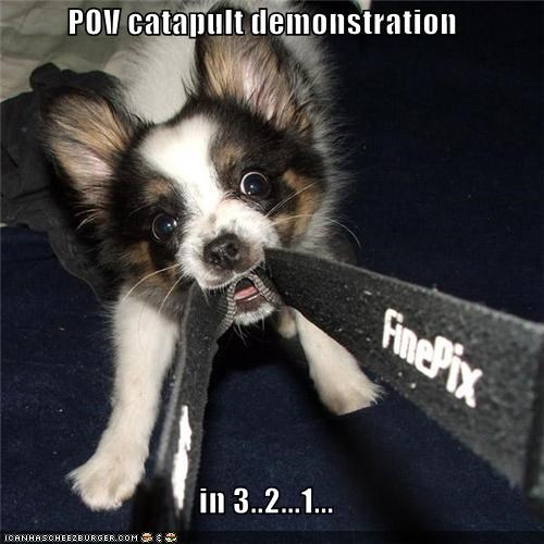 camera,catapult,countdown,demonstration,one,pov,puppy,strap,three,two,whatbreed