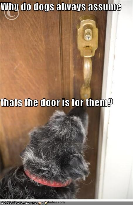 assume dogs door for question them whatbreed why