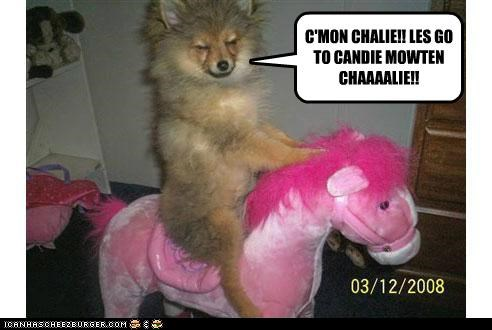 best of the week,candy,charlie the unicorn,Hall of Fame,horse,lets go,meme,memedogs,mountain,riding,riding horse,whatbreed
