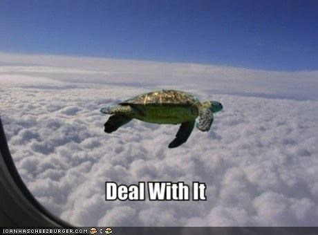 airplane animated gifs caption Deal With It flying gifs Memes photoshopped sea turtle sky - 4826429184