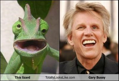 actors chameleon derp gary busey Hall of Fame lizards - 4826635264