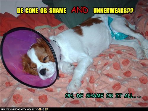 and,ashamed,cavalier king charles spaniel,cone of shame,do not want,shame,underwear