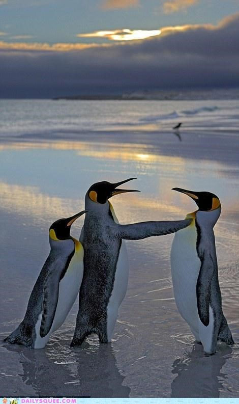 acting like animals,emperor penguin,fight,penguin,penguins,telling off,threat,turf war